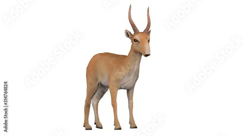 Valokuva Saiga antelope with slight diagonal left view isolated white background 3d rende