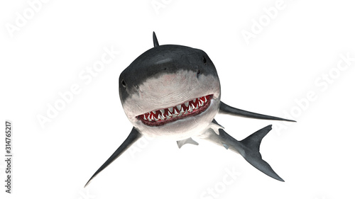 Cuadros en Lienzo Great white shark isolated on white background cutout ready threatening smile 3d