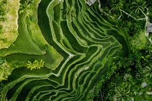 Landscape Of The Ricefields An...
