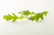 sałata rukola liść