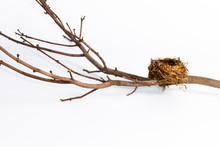 Bird Nest On Tree Limb On Wite