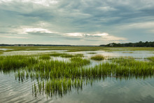 Wetlands, Hilton Head Island, ...