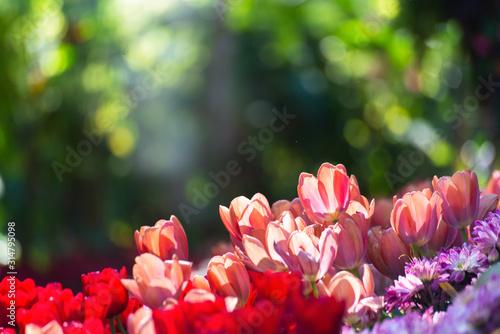 Obraz red flowers in the garden - fototapety do salonu