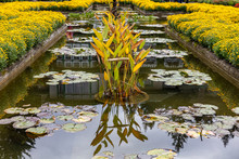 Yellow Plants In A Pond