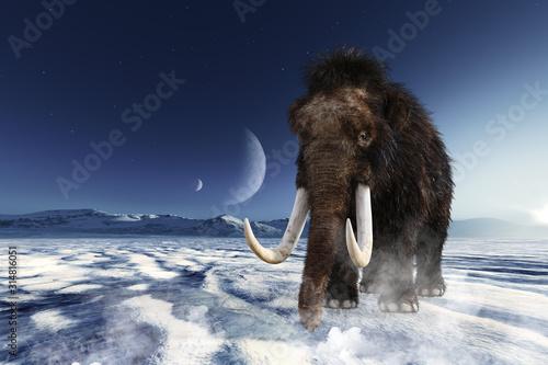 Cuadros en Lienzo  月が見える氷の大地を山を背に歩き進むマンモス
