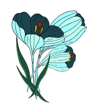 Bouquet Of Blue Crocuses. Vector Illustration.