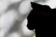 Shadow Of The Profile Of A Cat...