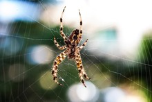 Colorful Spider Hanging In A W...