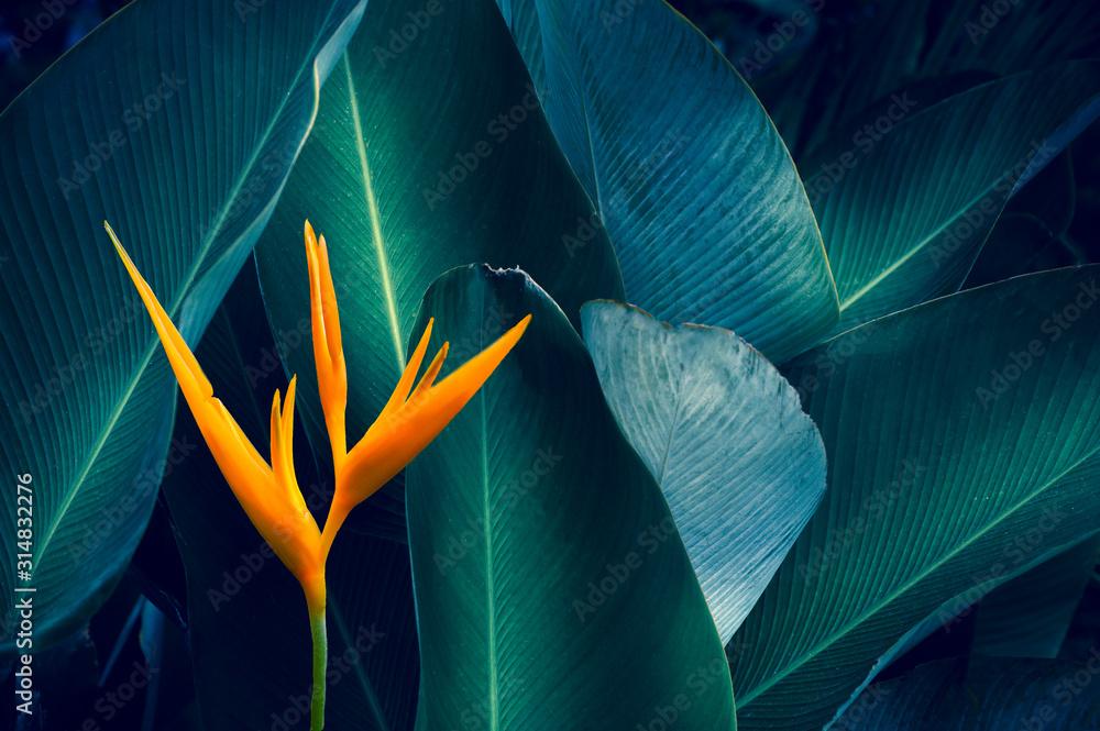 Fototapeta tropical leaves colorful flower on dark tropical foliage nature background dark green foliage nature