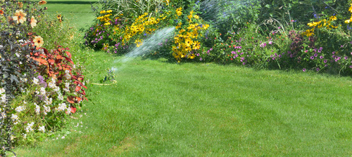 Obraz sprinkler in the lawn watering flowers in a beautiful garden in summer - fototapety do salonu