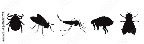 Vector silhouette of flea and fly and thic and mosquito on a white background. Symbol of parasites like set together.