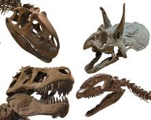 Dinosaurs' Skulls Isolated On White Background
