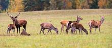Autumn Idyll. A Large Family O...