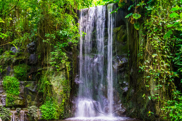 Panel Szklany Wodospad streaming waterfall with many plants in a jungle scenery, beautiful nature background