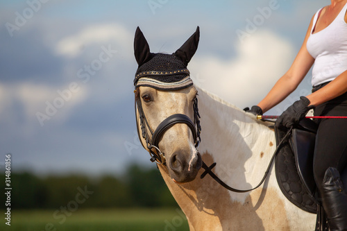 Fototapeta Horse leisure dressage in portraits in summer outdoors under the rider, with bridle and ear cap when riding.. obraz