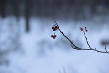 Winter Landscape Snow Cold Bac...