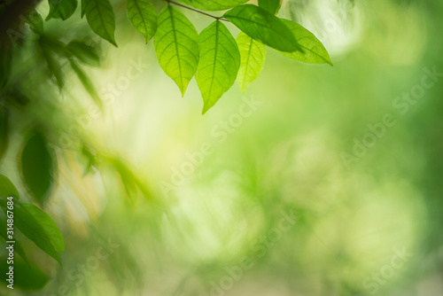 Fototapety, obrazy: Green leaf for nature on blurred background with beautiful bokeh and copy space for text.