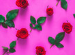 canvas print picture - Valentine's day concept. Red rose isolated on purple or pink background.