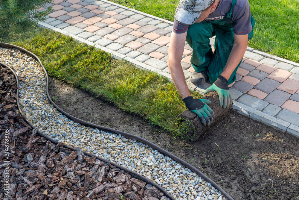 Fototapeta Landscape Gardener Laying Turf For New Lawn