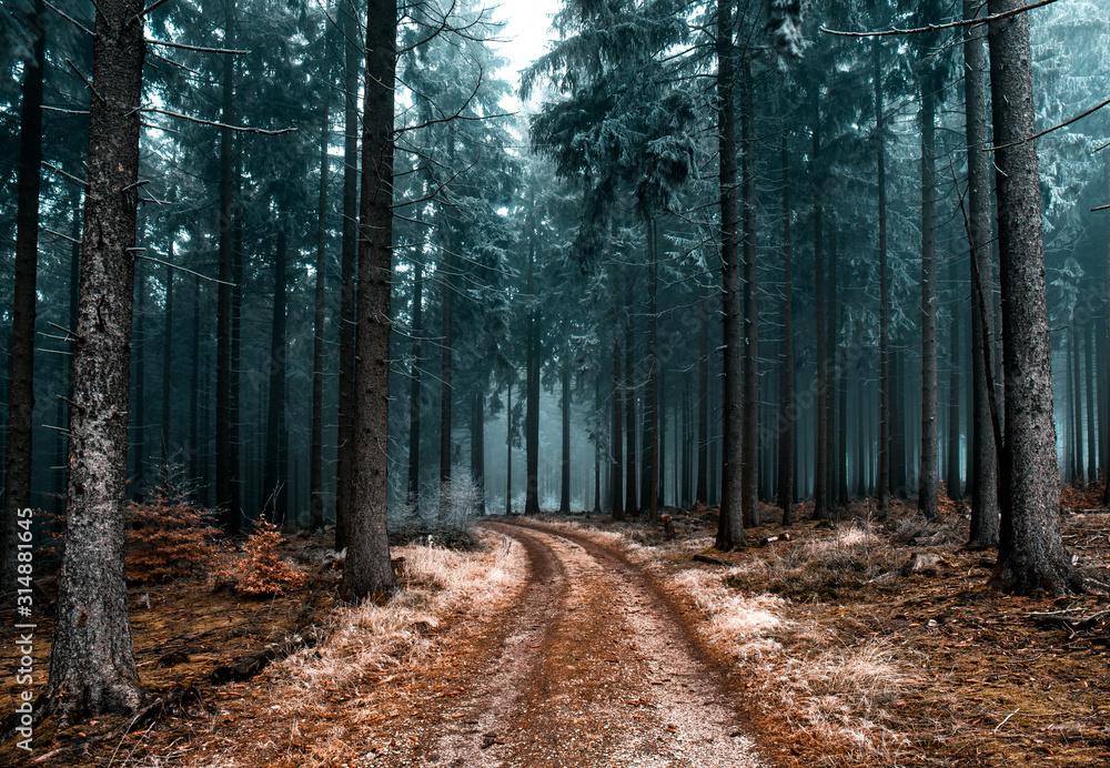 Fototapeta Cold Frozen Woodlands