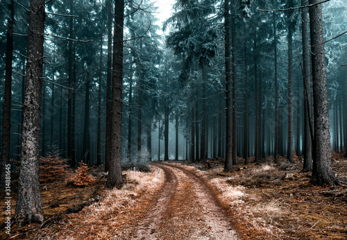 Obraz Cold Frozen Woodlands - fototapety do salonu