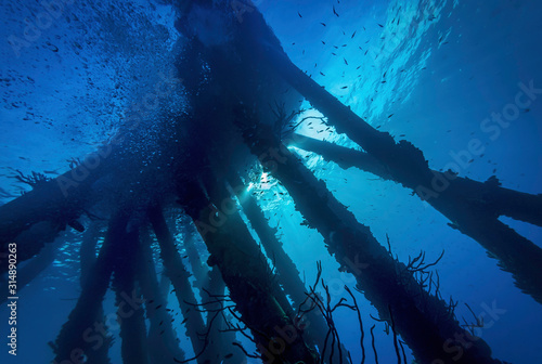 Underwater view of a salt water pier Canvas Print