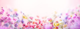 Fototapeta Kwiaty - Spring floral composition made of fresh colorful flowers on light pastel background. Festive flower concept with copy space.