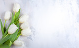 Fototapeta Tulipany - Beautiful white tulips flowers for holiday.