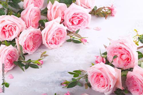 Beautiful pink roses flowers © Svetlana Kolpakova