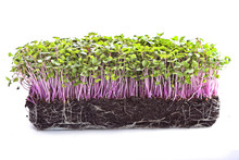 Microgreens Sprouts - Healthy ...