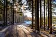 canvas print picture - ein Waldweg im Winter mit Sonne
