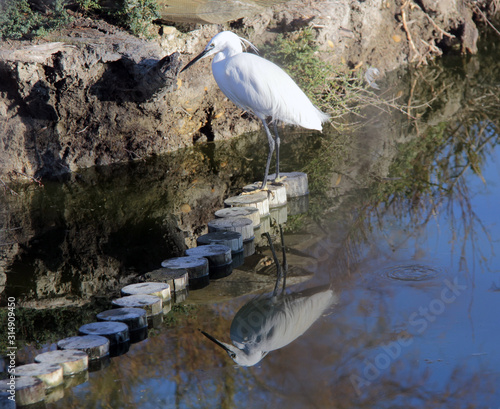 Photo aigrette et son reflet