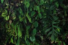 Vertical Garden Nature Backdro...
