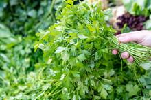 Choosing Very Fresh Vegetable ...
