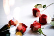 canvas print picture - Red roses and yellow bokeh background