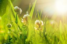 Art Spring Natural Green Backg...