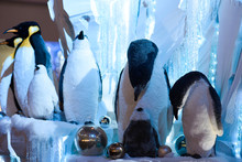 Penguins Toys Feed Cubs On Ice