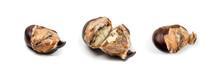 Edible Sweet Chestnuts, Health...