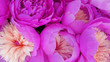 Leinwanddruck Bild - Beautiful pink flower petals background