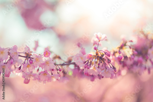 Spring blossom background Canvas Print