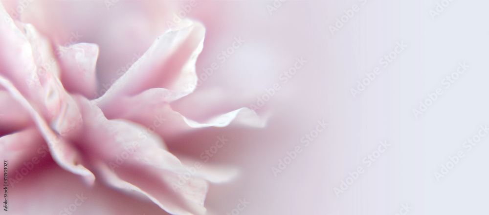 Fototapeta Abstract floral blurred background or banner with copy space