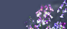 Blue Floral Background Or Banner With Copy Space