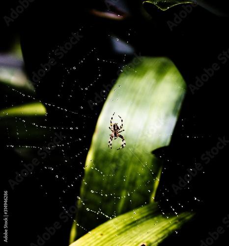 A spiderweb full of rain drops Canvas Print