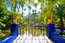 The Beautiful Majorelle Garden...