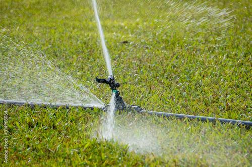 Cuadros en Lienzo Landscape of irrigation garden