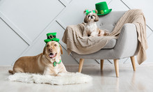 Cute Dogs At Home. St. Patrick...
