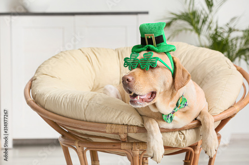 Fotografia Cute dog with green hat at home. St. Patrick's Day celebration