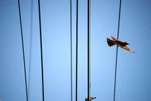電線・飛び立つ鳥