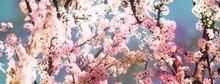 Blühende Zweige Im Frühling