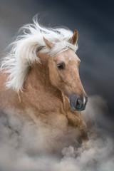 Fototapeta Koń Palomino horse with long mane portrait in motion on desert sandy dust